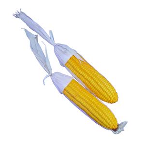 Kwanzaa Corn